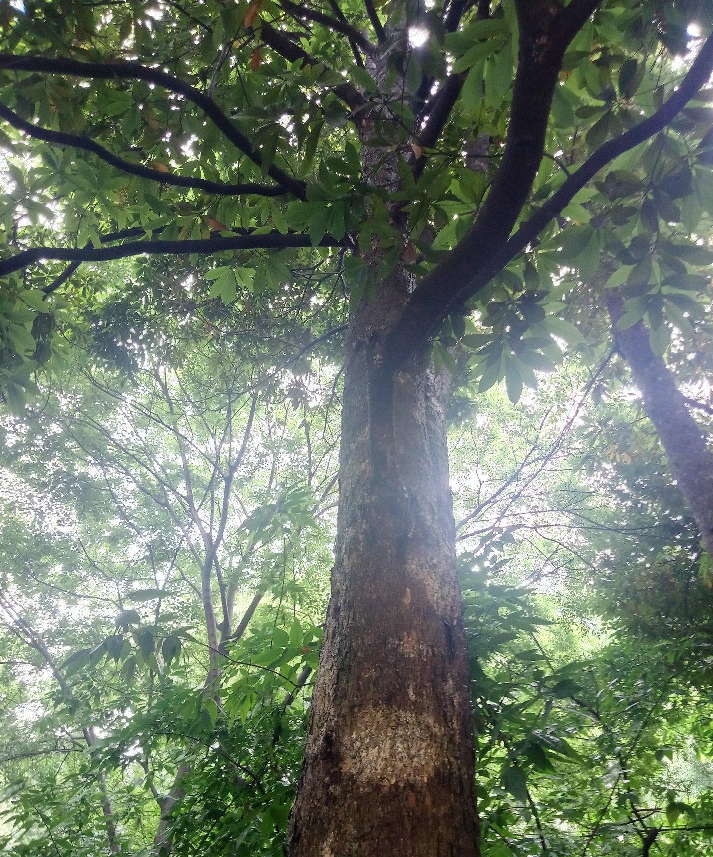 经常被丢弃的树皮有什么用?