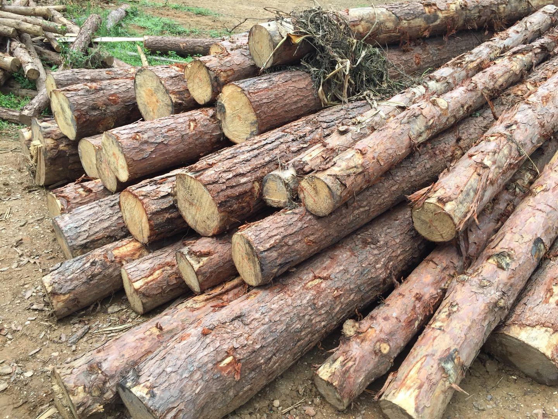 建筑木方一立方有多重?